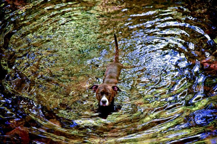 Dog Park Amherst Ma
