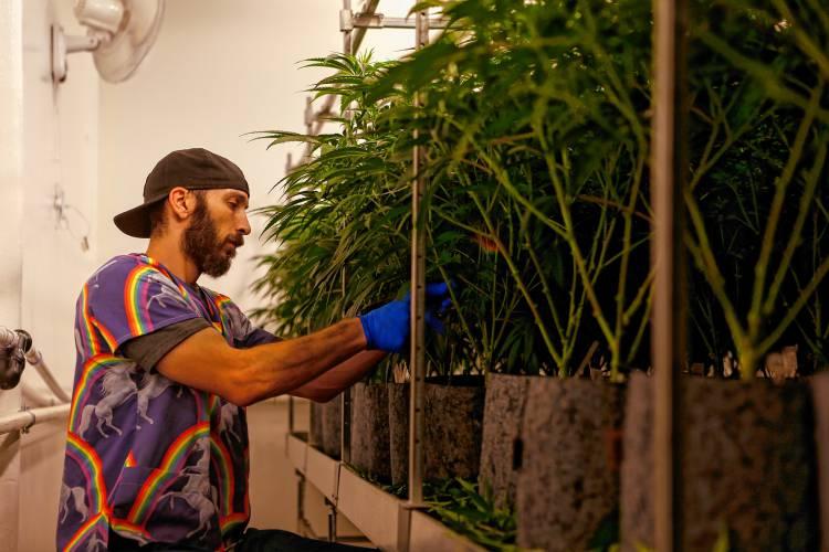 Plans on hold, communities flounder as retail marijuana